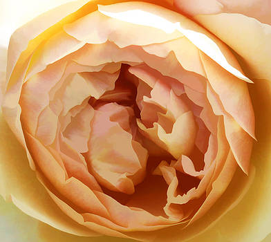 Landscape of a Rose by Beth Fox
