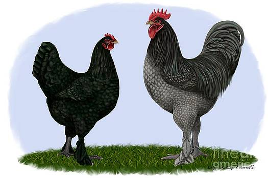 Langshan Rooster and Hen by Leigh Schilling