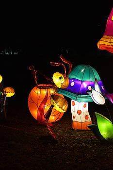 Lantern Mushrooms 3 by Jim Martin