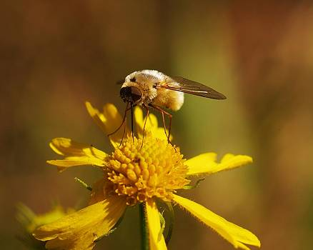 Billy  Griffis Jr - Large Bee Fly