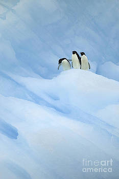 Large blue iceberg and three penguins. by Rosemary Calvert