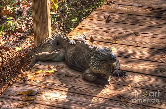 Dan Friend - Large Iguana