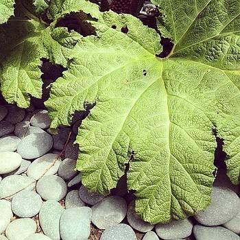 Large Leaf Love by Rebecca Guss