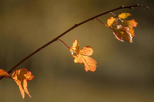 Last Fall Light by Dawn Morrow