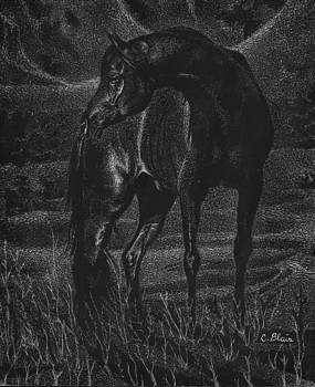 Last Horse On Earth by Chelsea Blair