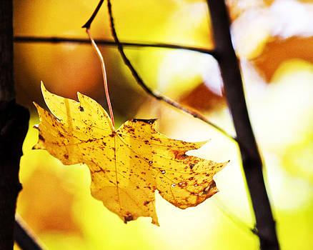 Last Leaf Hanging by Penny McClintock