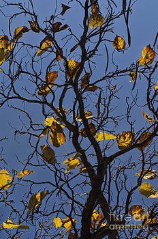 Dave Gordon - Last Leaves of Autumn