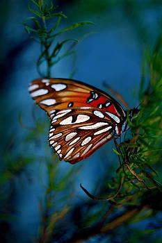 Last Light Butterfly by Don Bangert