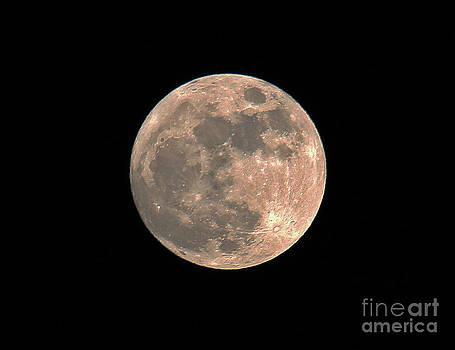 Last Moon by Jeff Sommerfield