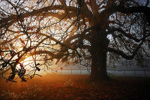 last of the Autumn wine by John Chivers
