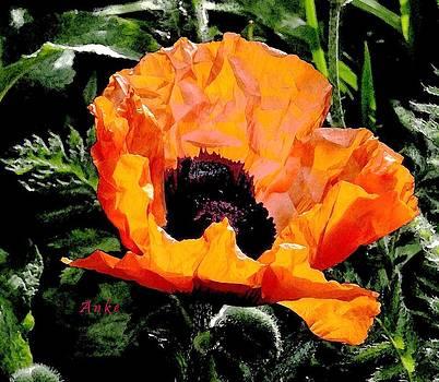 Last Red Poppy of Summer by Anke Wheeler