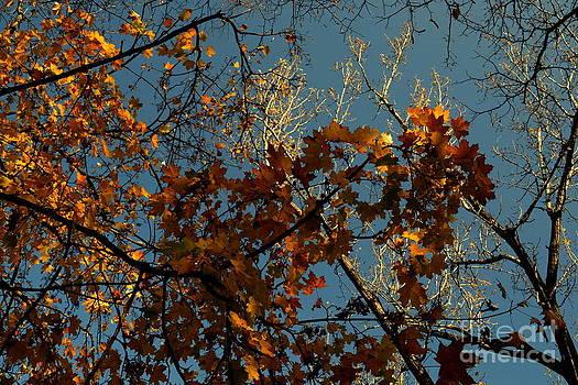 Late Autumn by Bajan Sorin