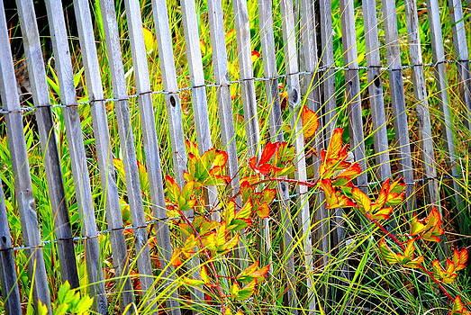 Late Summer Bloom by Leah Reynolds