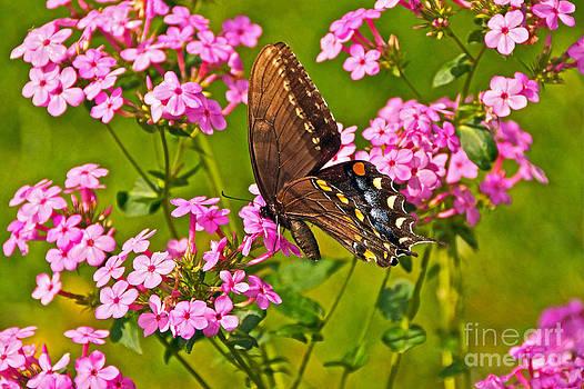 Byron Varvarigos - Late Summer Color