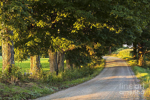 Late Summer Country Road by Alan L Graham