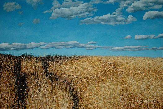 Late Summer Field Maxwell Settlement by Allan OMarra