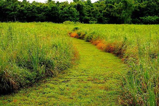 Late Summer Meadow by Leah Reynolds