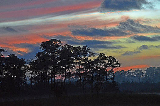 Bill Swartwout Fine Art Photography - Late Sunset Trees in the Mist