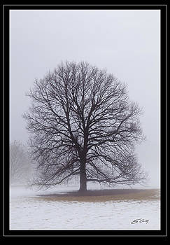 Late Winter Fog   Framed by Ed Cilley