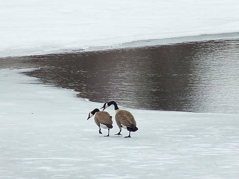 Late Winter Geese by Gene Cyr