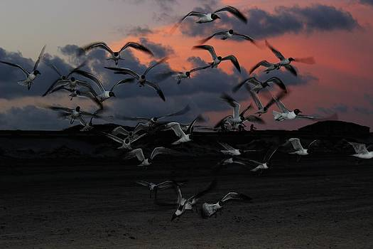 Laughing Gull Twilight by Candice Trimble
