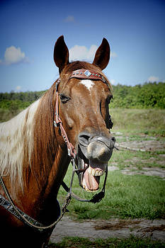 Laughing Horse by Keith Lovejoy