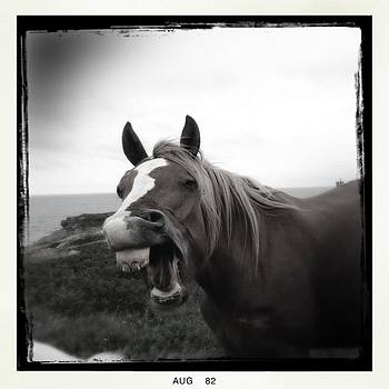 Laughing Horse by Tracy Munson