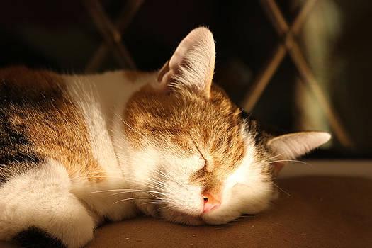 Laurel takes a nap by Derek Sherwin