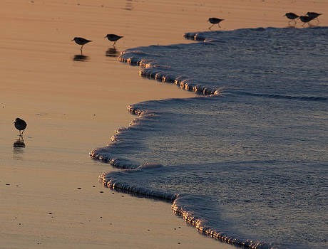John Daly - Lava Flow Birds