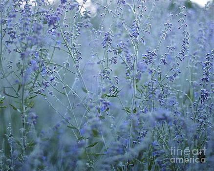 Lavender Dusk by Kimberly Nickoson