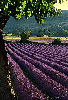 Lavender Fields by Cole Black