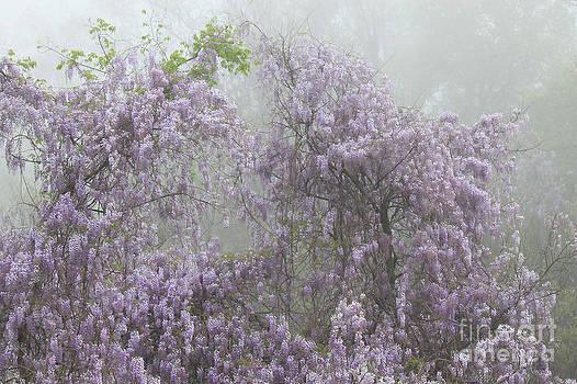 Lavender Fog by Leslie Kirk