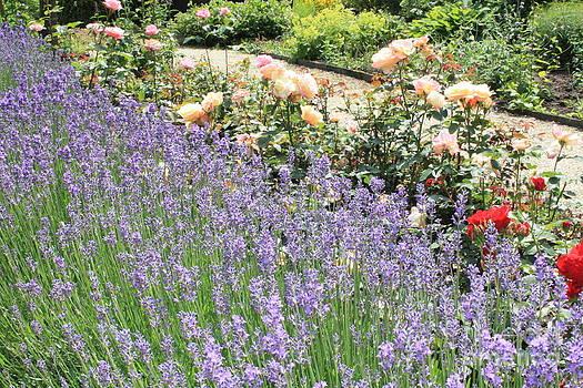 Danielle Groenen - Lavender Garden