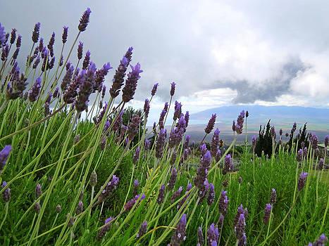 Lavender Grey by Melanie Beckler