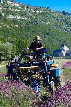 Lavender Harvest by Dany Lison
