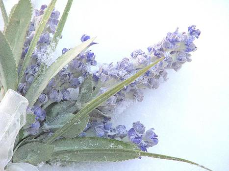 Angela Davies - Lavender In Snow