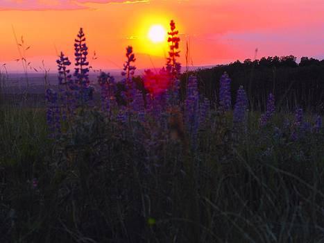 Lavender in the Field by Jodi Eaton