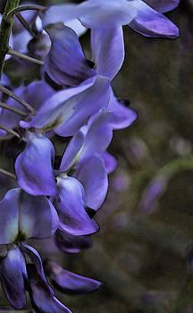 Joe Bledsoe - Lavender