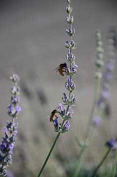 Lavender Rest Stop by Joie Cameron-Brown