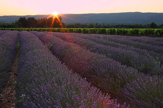Susan Rovira - Lavender Sunset