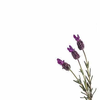 Jan Hagan - Lavender Trio