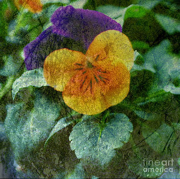 Layered Pansy by Eva Thomas