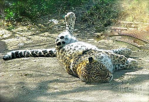 Lazy Cat at the Living Desert by Phyllis Kaltenbach