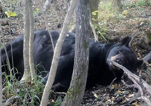 Lazy Day Black Bear by Jody Benolken