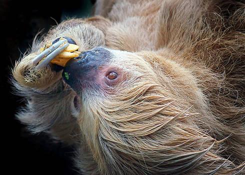 Nikolyn McDonald - Lazy Lunch - Sloth