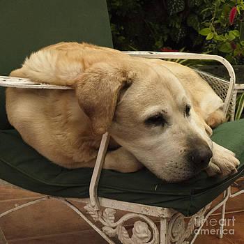 Heiko Koehrer-Wagner - Lazy Pet Series 1