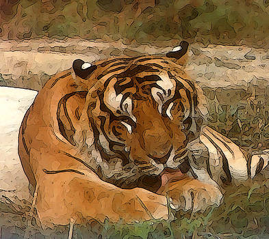 Lazy Tiger by Piero Lucia