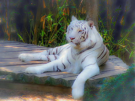 Lazy white tiger by Renee Barnes