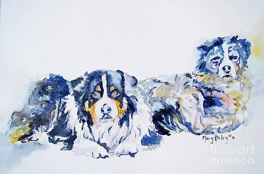 Leadville Street Dogs by Mary Haley-Rocks
