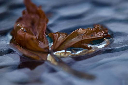 Leaf Afloat by Nancy Edwards